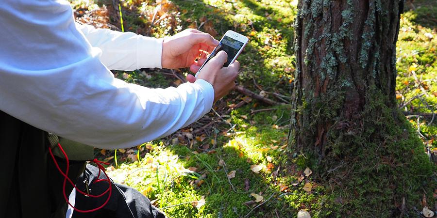 Arboreal trädhöjdsmätning kan vinna pris i SkogsElmia Innovation Award. Arboreal har fått affärsstöd inom Uminova Innovation.